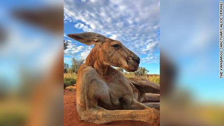 RIP Roger Kangaroo