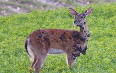 Zombie Deer?