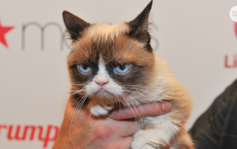 The Internet Sensation Grumpy Cat Has Died